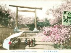Cherry Blossom of Nogeyama