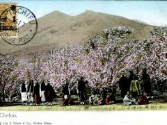 Tschifu Gruppe Bäume