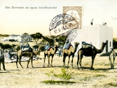 das Dromedar als neues Verkehrsmittel