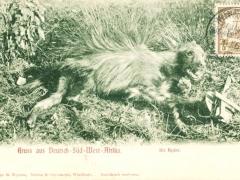 die Hyäne