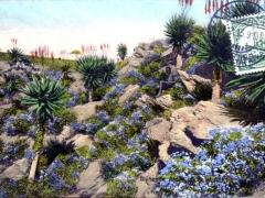 Blühende Aloes
