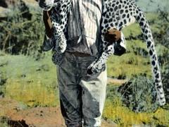 Erlegter Leopard