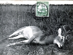 Erlegte Antilope