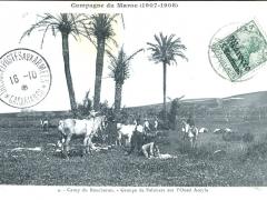 Camp du Boucheron Groupe de Palmiers sur l'Oued Aceyla