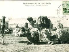 Casablanca Groupe de Chameaux