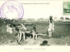 Casablanca Laboureur Marocain