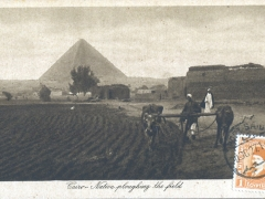 Cairo native ploughing the field