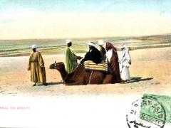 Chameau en Desert