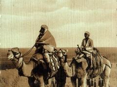 Chameliers a Suez