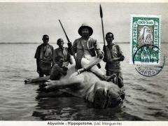 Hippopotame Lac Marguerite