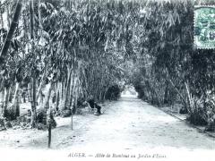 Alger Allee de Bambous au Jardin d'Essai