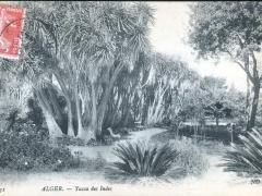 Alger Yucca des Indes