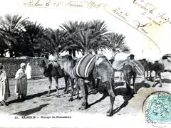 Algerie Groupe de Chameaux