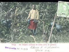 Congo Um indigena acabando de cother vinho de palmeira