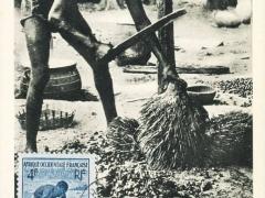 Egrenage des amandes de palmistes au machete