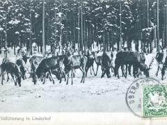 Linderhof Wildfütterung