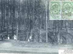 Sous bois de Groenendael