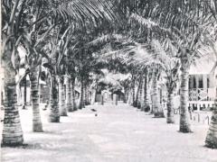 Alle-des-Cocotiers-a-Caijo