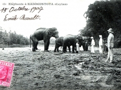 Elephants a Kadogustota