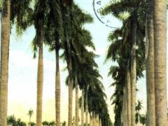 Calle de palmas