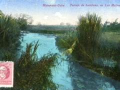 Matanzas-Paisaje-de-bambues-en-Los-Molinos