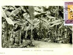 AdArah-Une-Bananeraie