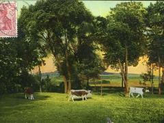 Walbach Rinderweide
