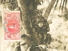 Grand Bassam Chimpanze