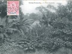 Congo Francais Flore Tropicale