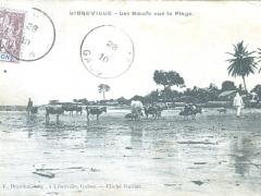 Libreville Les Boeufs sur la Plage