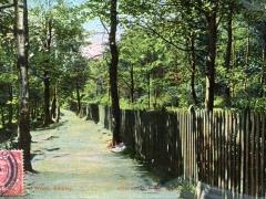 Shipley Glen Wood