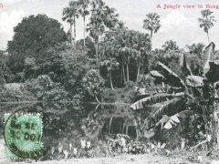 A-Jungle-view-in-Bengal