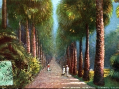 Calcutta Palm Avenue Botanical Gardens
