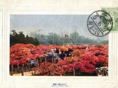 Azalea at Hibiya Park