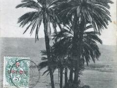 Ben Sliman Groupe de Palmiers