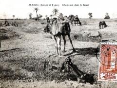 Chameaux dans le desert