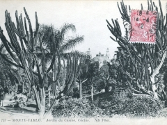 Jardin du Casino Cactus