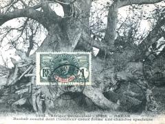 Baobab-couche-dont-linterieur-creux-forme-une-chambre-spacieuse