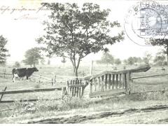 Weide mit Kuh