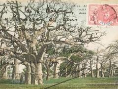 Dakar afrikanische Baumlandschaft