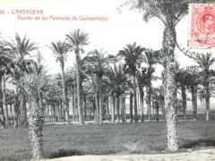 Cartagena Huerto de las Palmeras de Quitapellejos
