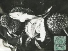 Fotokarte Frucht
