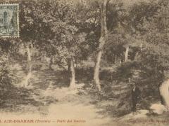 Ain Draham Foret des Sources
