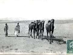 Chameliers dans les Dunes de Sable