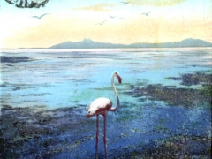 Flamand rose au bord du lac