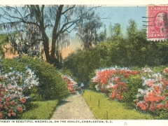 Charleston Pathway in beautiful Magnolia on the Ashley