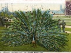 Tacoma-Peacock-Point-Defiance-Park