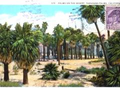 Thousand Palms on the Desert